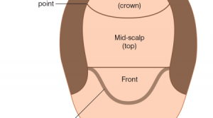 frontal mid scalp crown area